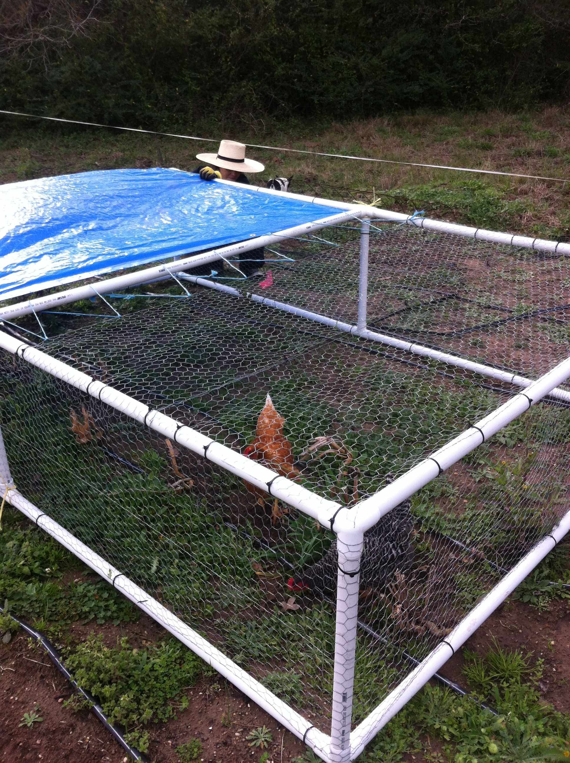 Chicken tractor laughing frog farm for Pvc chicken tractor plans