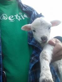 coexist lamb